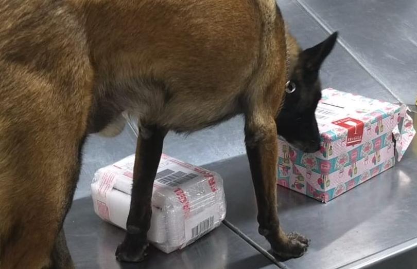 Photo of Detectan droga en aeropuerto queretano