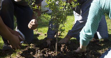 Universitarios realizan jornada de reforestación y limpieza en el Día de la Tierra en la UAQ