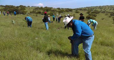 Respalda Gobierno iniciativa ciudadana de reforestación