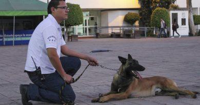 Refuerza UAQ medidas de seguridad con binomios caninos y rehiletes de acceso