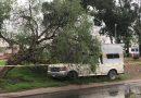 Cae árbol sobre camioneta en El Tintero