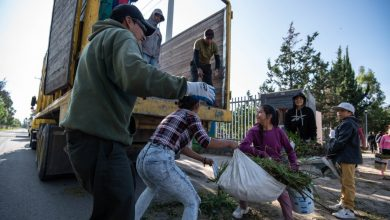 Photo of Realizarán campaña de recolección de árboles navideños en El Marqués