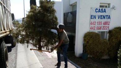 Photo of Arranca campaña de recolección de árboles navideños en El Marqués
