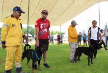 Photo of El próximo domingo 23 de febrero se realizará el primer gran festival canino
