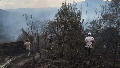 Photo of Consume incendio en Pinal de Amoles 70 hectáreas