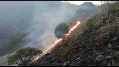 Photo of Controlan incendio en Pinal de Amoles, afectó 15 hectáreas
