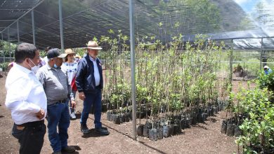Photo of SEDEA colabora en inversión tripartita a beneficio de la Sierra Gorda