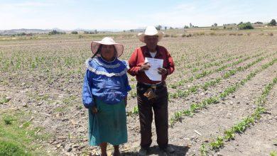 Photo of Se reactiva el campo queretano, Gobierno de México apoya a más de 14 mil productores locales