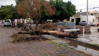 Photo of Te dejamos el recuento de los daños de la lluvia de este martes